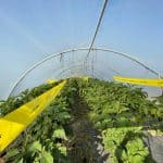 pest control solution